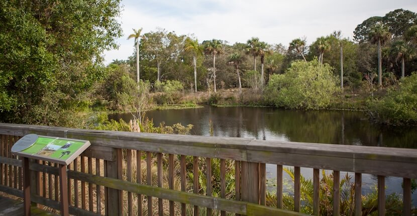 Small Pond at Conservancy of Southwest Florida