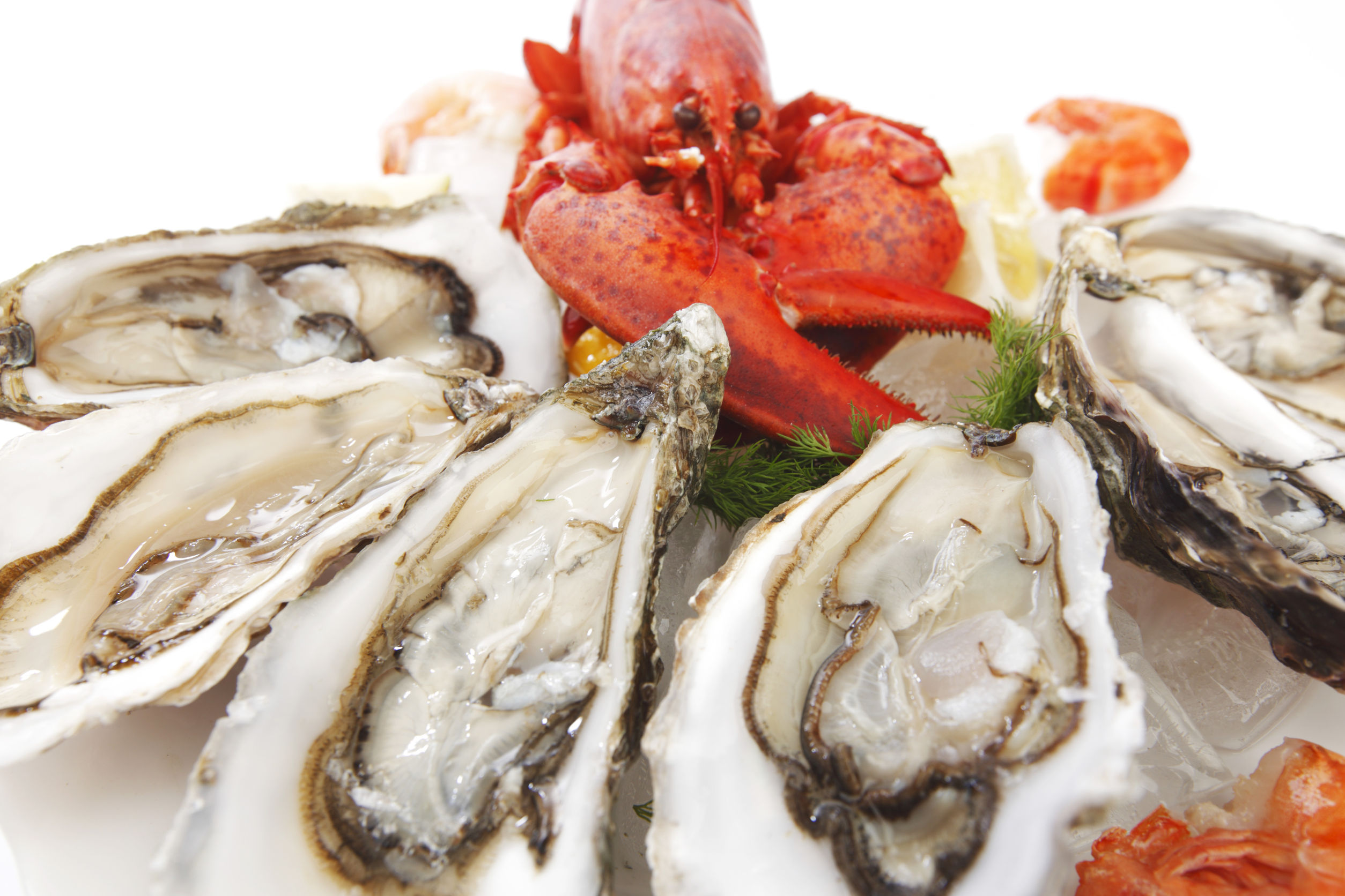 Top Seafood Restaurants In Naples Florida Naples Florida