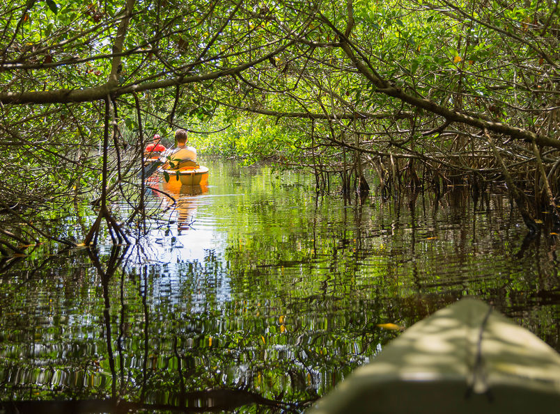 Mangrove tunnel paddleboarding naples florida